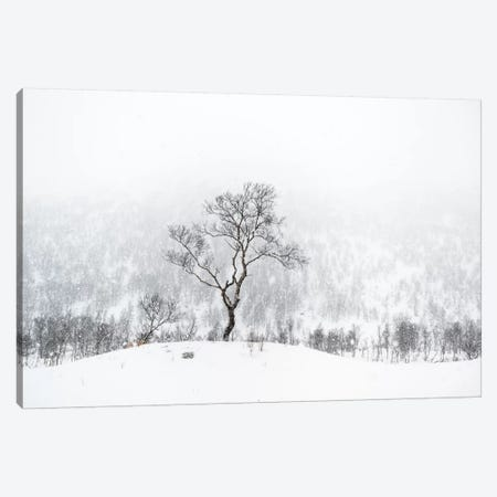 Standing Alone Canvas Print #STR60} by Andreas Stridsberg Canvas Art Print