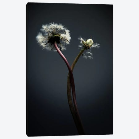 Twisted Canvas Print #STR64} by Andreas Stridsberg Canvas Wall Art
