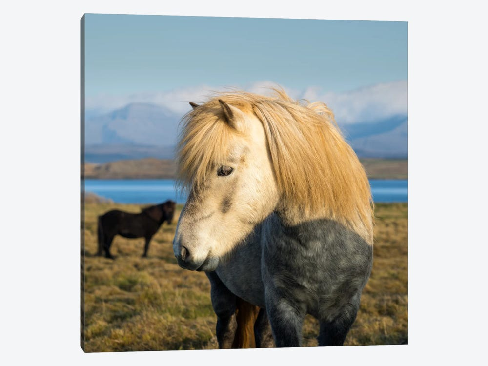 When In Iceland 1-piece Canvas Wall Art