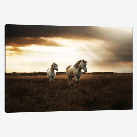 Bright Beauty Canvas Print #STR6} by Andreas Stridsberg Canvas Art