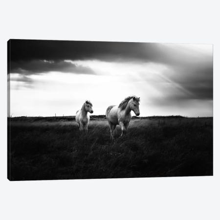 Bright Beauty-B&W 3-Piece Canvas #STR7} by Andreas Stridsberg Canvas Wall Art