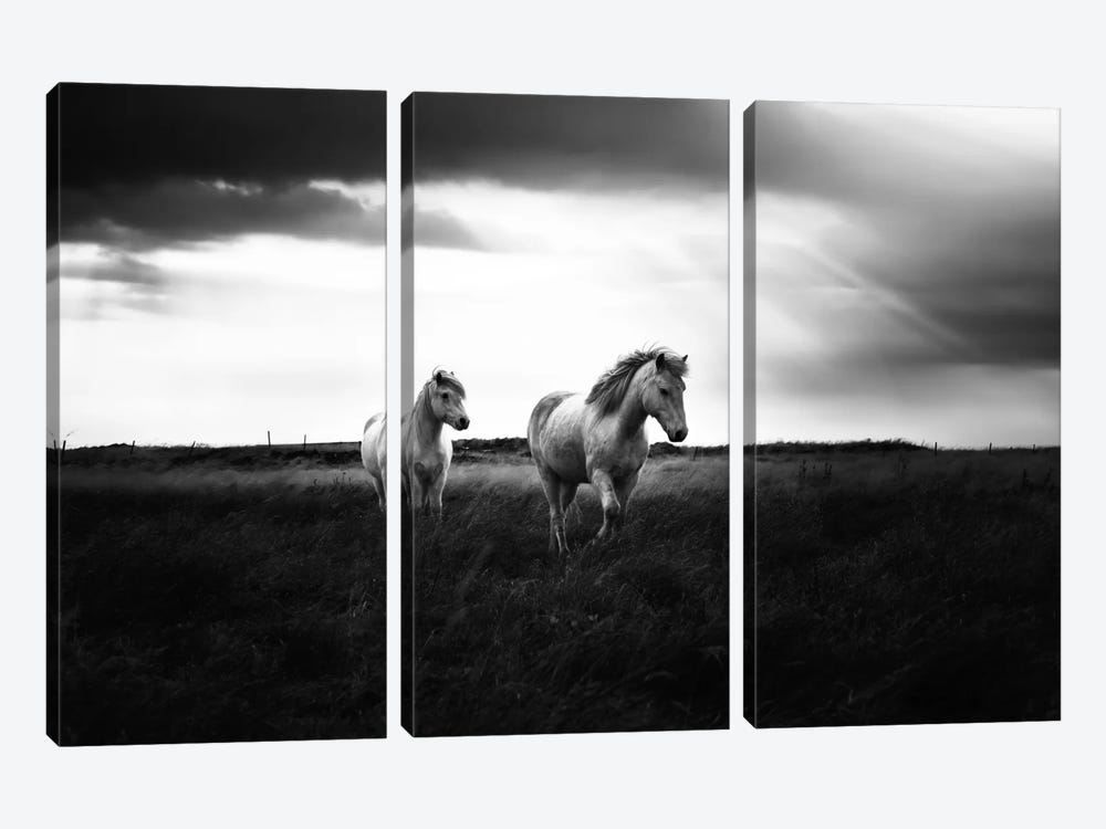Bright Beauty-B&W by Andreas Stridsberg 3-piece Canvas Art