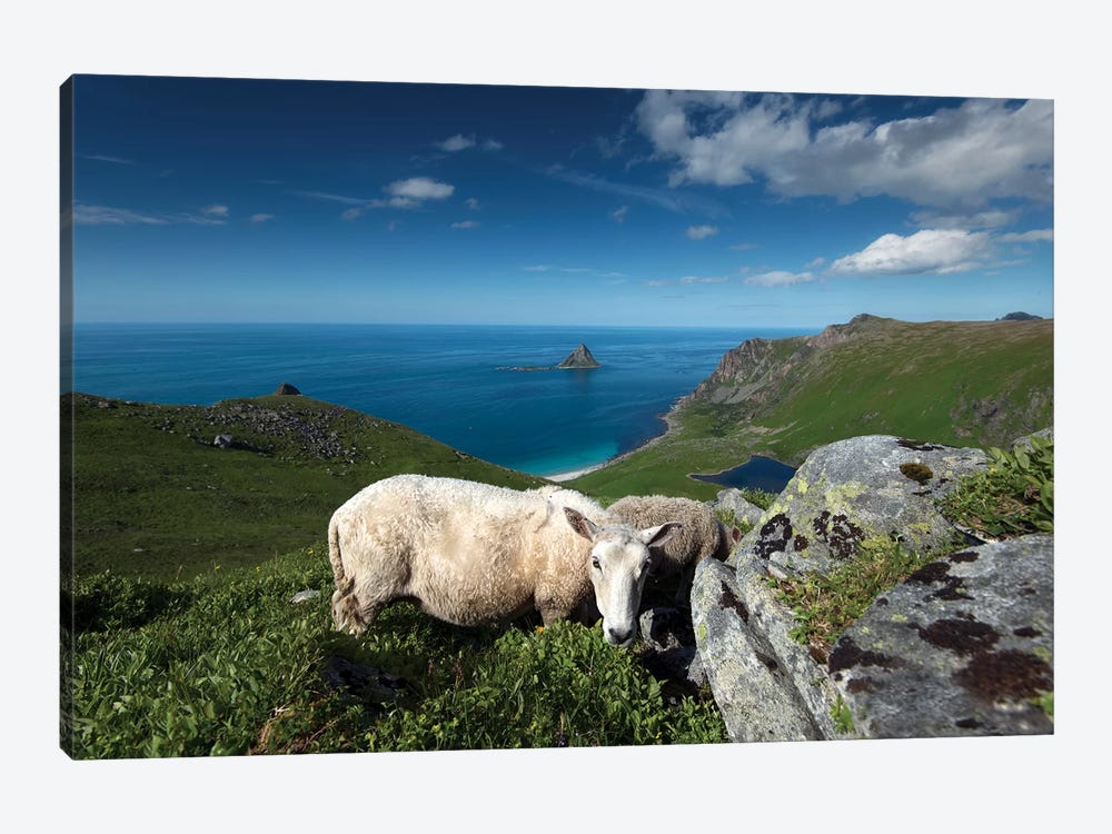 Lofoten Sheep by Andreas Stridsberg 1-piece Canvas Wall Art