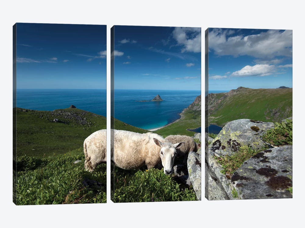 Lofoten Sheep by Andreas Stridsberg 3-piece Canvas Artwork