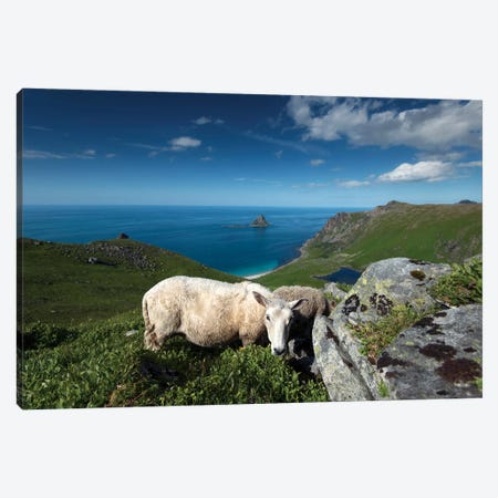 Lofoten Sheep Canvas Print #STR84} by Andreas Stridsberg Canvas Artwork