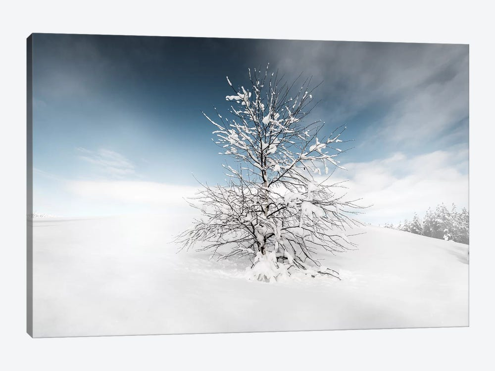 Winter Tree by Andreas Stridsberg 1-piece Canvas Artwork