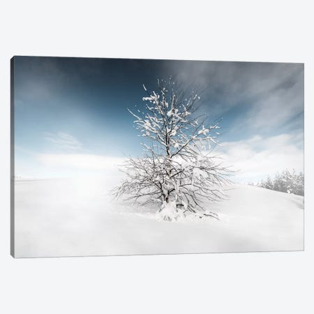 Winter Tree Canvas Print #STR91} by Andreas Stridsberg Canvas Art