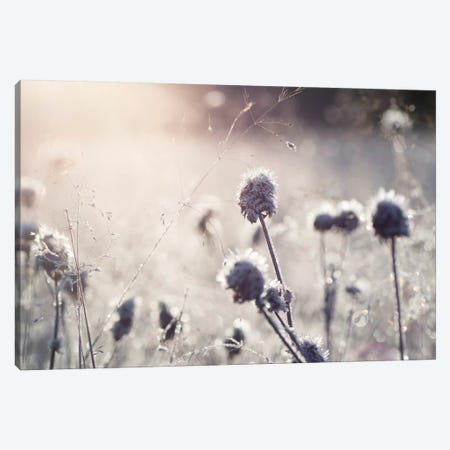 Frost I Canvas Print #STR95} by Andreas Stridsberg Canvas Art Print