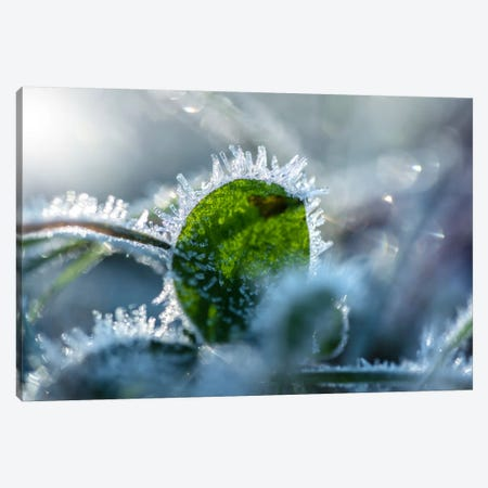 Frost II 3-Piece Canvas #STR96} by Andreas Stridsberg Canvas Art Print