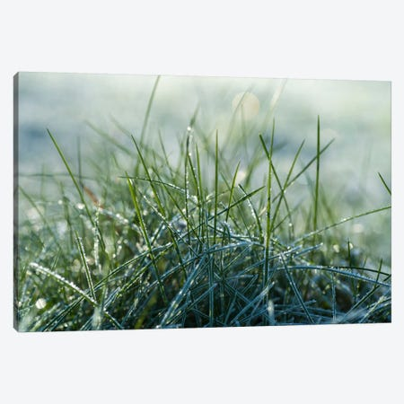 Frost III 3-Piece Canvas #STR97} by Andreas Stridsberg Art Print