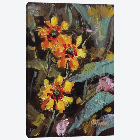 Black Eyed Susans Canvas Print #STT12} by Jennifer Stottle Taylor Canvas Wall Art
