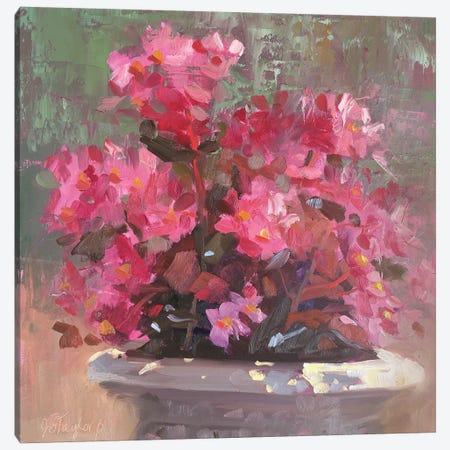 Bridgitt's Begonias Canvas Print #STT15} by Jennifer Stottle Taylor Canvas Art Print