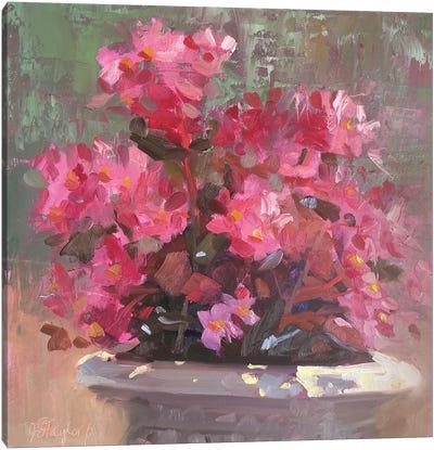 Bridgitt's Begonias Canvas Art Print