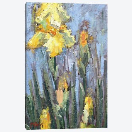 Yellow Iris And Co Canvas Print #STT97} by Jennifer Stottle Taylor Art Print