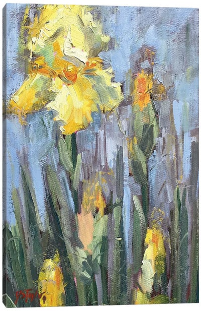 Yellow Iris And Co Canvas Art Print