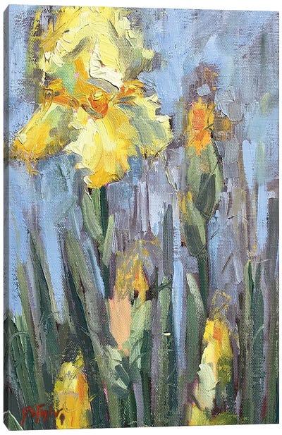 Yellow Iris And Co Canvas Art Print