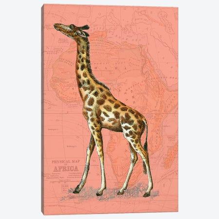 African Animals on Coral II Canvas Print #STW103} by Studio W Art Print