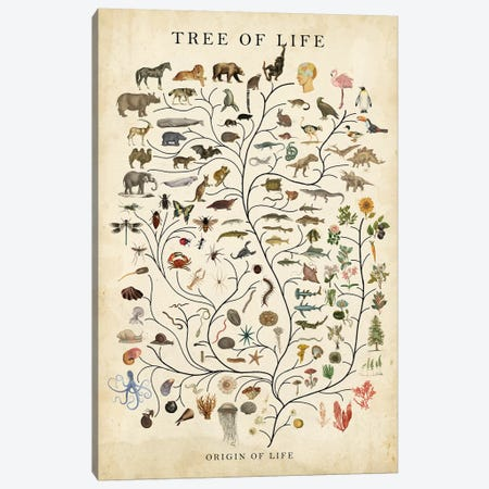 Tree of Life Canvas Print #STW137} by Studio W Canvas Art Print