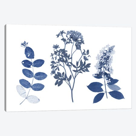 Indigo Pressed Florals I Canvas Print #STW96} by Studio W Canvas Wall Art