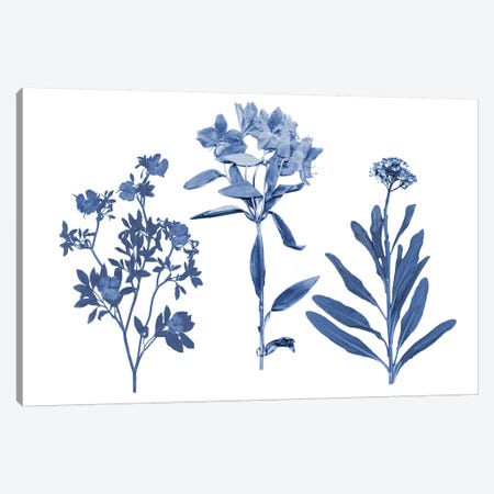 Indigo Pressed Florals II Canvas Print #STW97} by Studio W Canvas Artwork