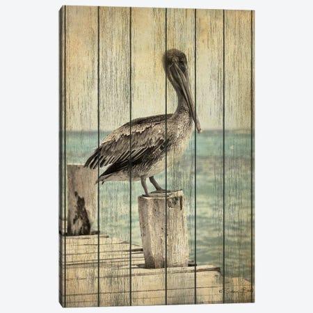 Vintage Pelican I  Canvas Print #SUB76} by Susan Ball Canvas Artwork