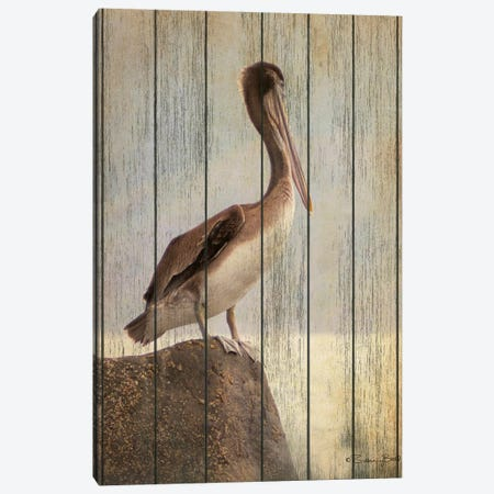 Vintage Pelican II Canvas Print #SUB77} by Susan Ball Canvas Art