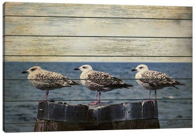 Vintage Seagulls  Canvas Art Print
