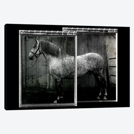 Equine Double Take IV Canvas Print #SUF10} by Susan Friedman Canvas Art Print