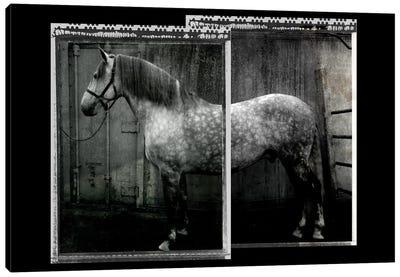 Equine Double Take IV Canvas Art Print