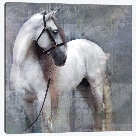Horse Exposures II Canvas Print #SUF1} by Susan Friedman Art Print