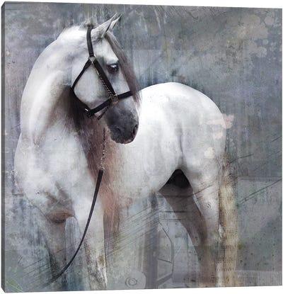 Horse Exposures II Canvas Art Print
