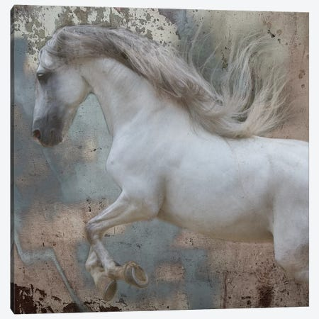 Horse Exposures IV Canvas Print #SUF2} by Susan Friedman Canvas Print