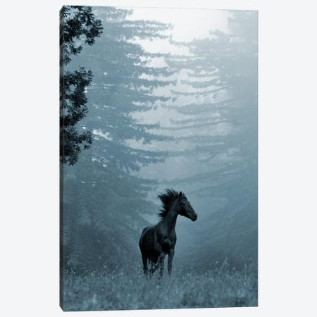 Horse in the Trees I Canvas Print #SUF3} by Susan Friedman Canvas Art Print