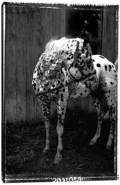 Equine Double Take II Canvas Art Print