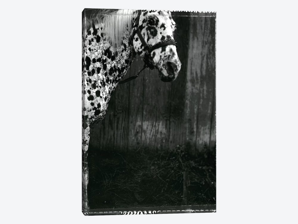 Equine Double Take III by Susan Friedman 1-piece Art Print