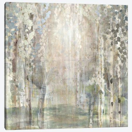 Birch Wood Clearing Canvas Print #SUS149} by Susan Jill Canvas Art