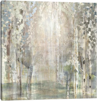 Birch Wood Clearing Canvas Art Print