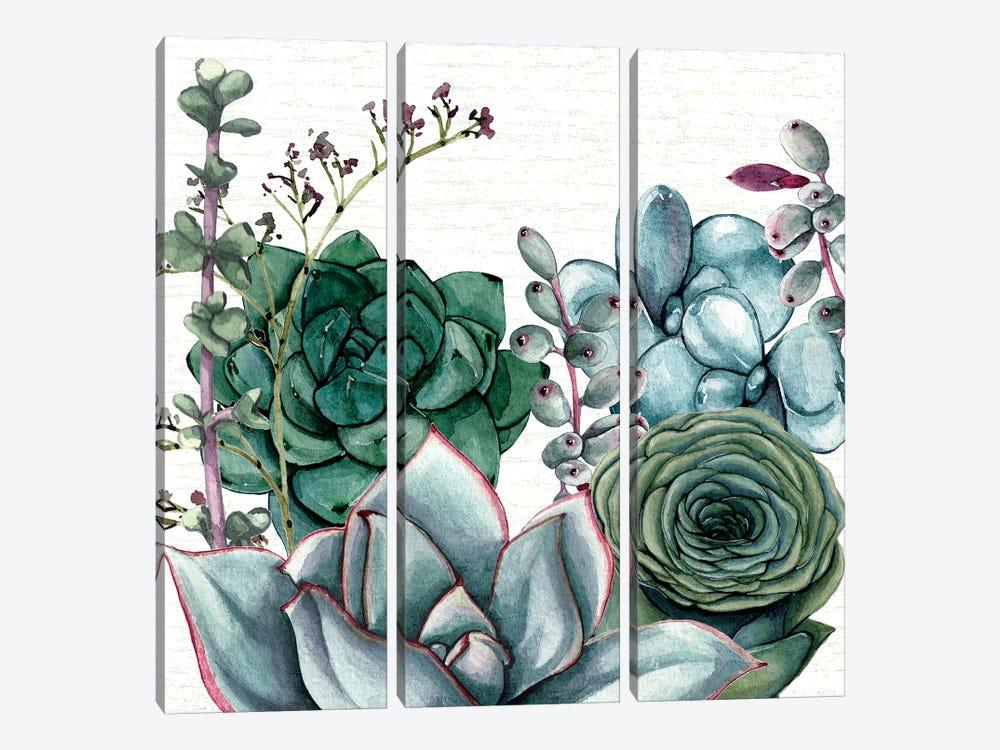 Succulent Garden I by Susan Jill 3-piece Canvas Artwork