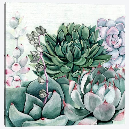 Succulent Garden II Canvas Print #SUS95} by Susan Jill Canvas Print