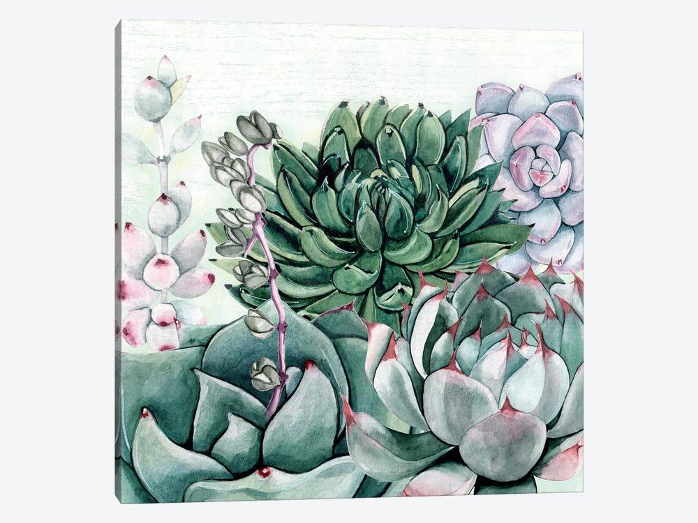 Succulent Garden II by Susan Jill 1-piece Canvas Print