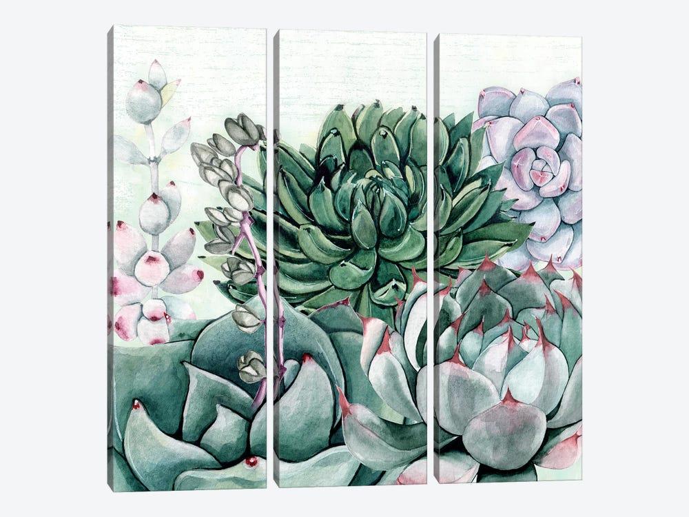 Succulent Garden II by Susan Jill 3-piece Art Print
