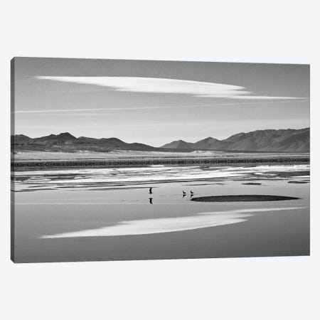 Three Reflective Birds Canvas Print #SUV100} by Susan Vizvary Canvas Artwork