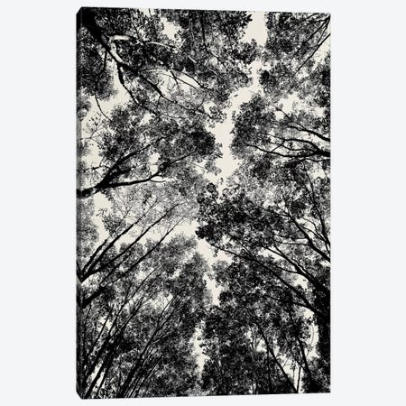 Up Through The Trees Canvas Print #SUV102} by Susan Vizvary Canvas Art