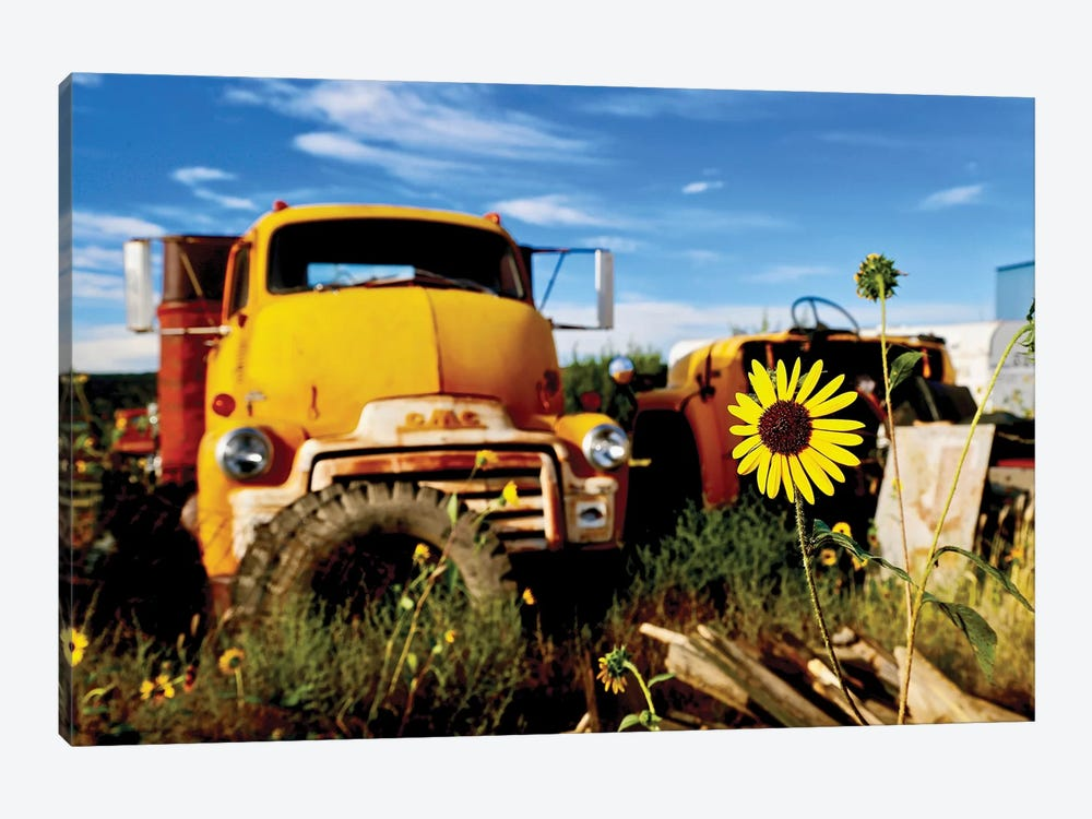 Yellow Daisy With Truck by Susan Vizvary 1-piece Canvas Art