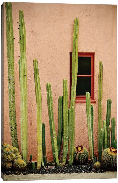 Adobe Cactus Canvas Art Print