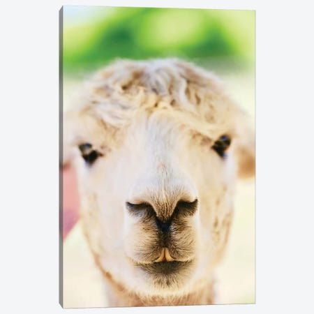 Alpaca Nose Close-Up Canvas Print #SUV120} by Susan Vizvary Canvas Wall Art