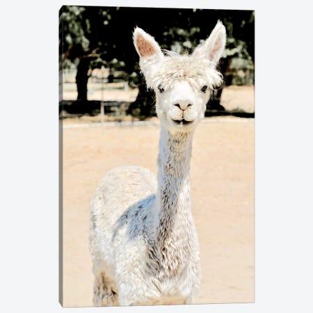 Extra White Alpaca Canvas Print #SUV126} by Susan Vizvary Art Print