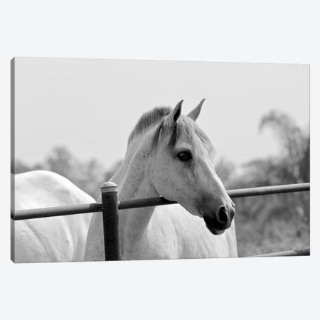 Horse Over Fence In Black And White Canvas Print #SUV132} by Susan Vizvary Canvas Print
