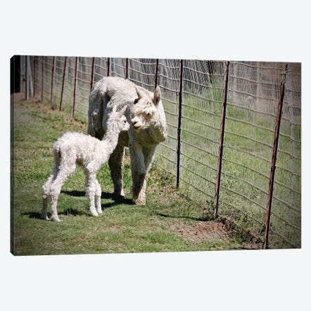 Mama And Baby Canvas Print #SUV143} by Susan Vizvary Canvas Wall Art