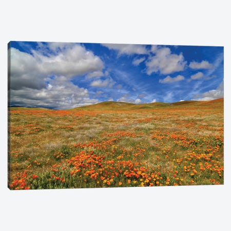 Poppies With Clouds Canvas Print #SUV148} by Susan Vizvary Canvas Artwork